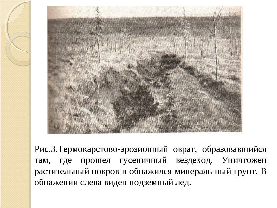 Рис.3.Термокарстово-эрозионный овраг, образовавшийся там, где прошел гусеничн...