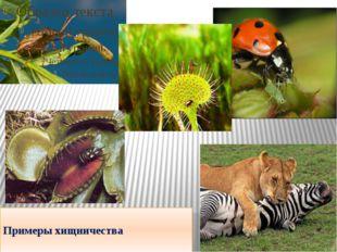 Примеры хищничества