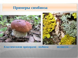 Примеры симбиоза Классическими примерами симбиоза являются…………