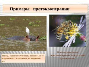 Примеры протокооперации Птицы помогаютбегемотуизбавитьсяот надоедливых на