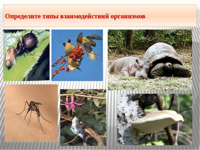 Определите типы взаимодействий организмов