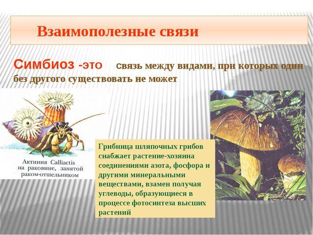 Взаимополезные связи Симбиоз -это связь между видами, при которых один без д...