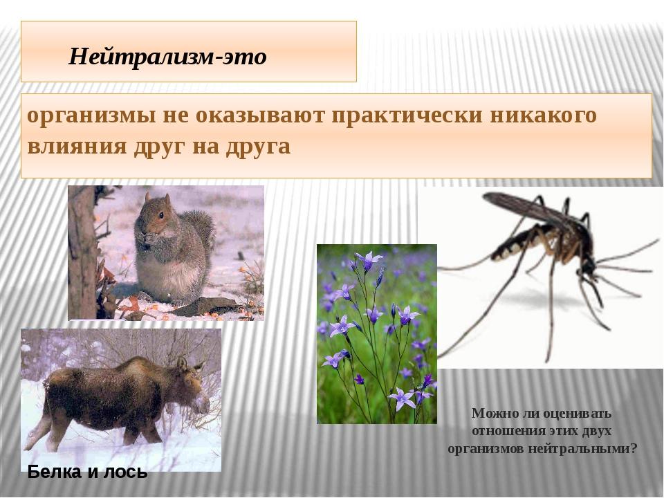 Нейтрализм-это организмы не оказывают практически никакого влияния друг на д...