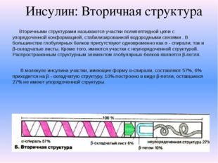 Инсулин: Вторичная структура Вторичными структурами называются участки полипе