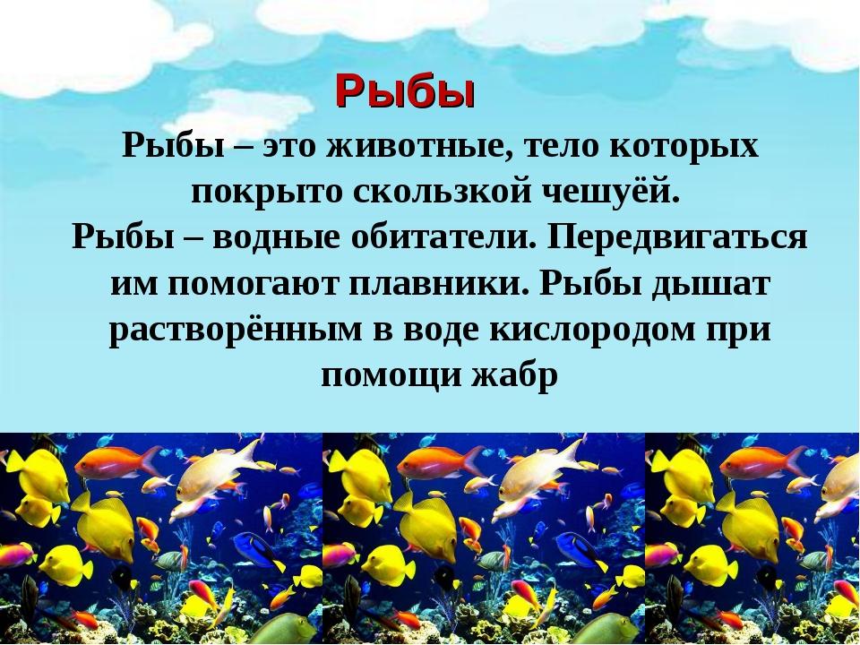 Рыбы Рыбы – это животные, тело которых покрыто скользкой чешуёй. Рыбы – водны...