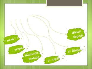 Өсімдік - Үнемі өседі өзгереді Жапырақ жаяды гүлдейді түйіндейді Жеміс береді
