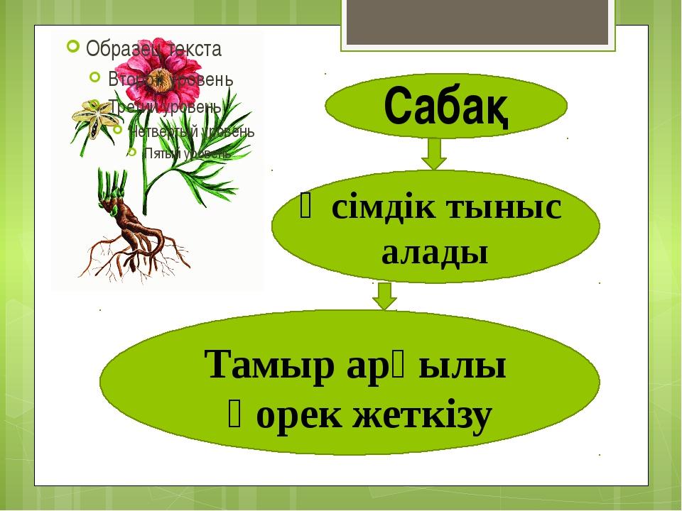 Сабақ Өсімдік тыныс алады Тамыр арқылы қорек жеткізу