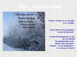 Зима – трудное время Гибнут птицы не от холода, а от голода. Если начал птиц