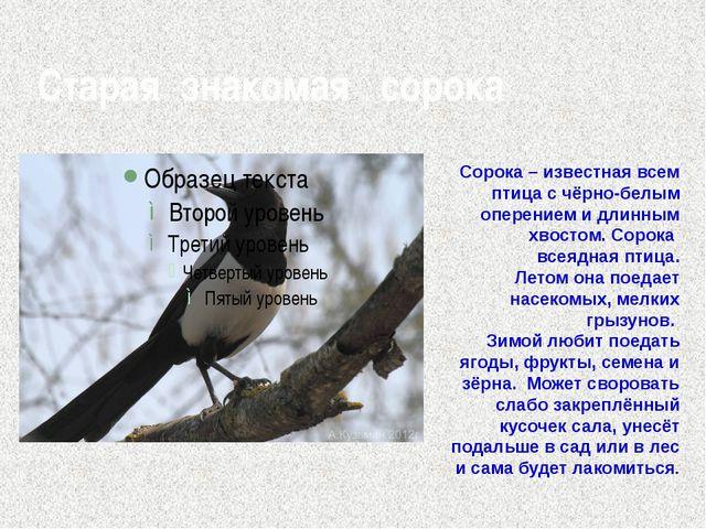 Старая знакомая сорока Сорока – известная всем птица с чёрно-белым оперением...