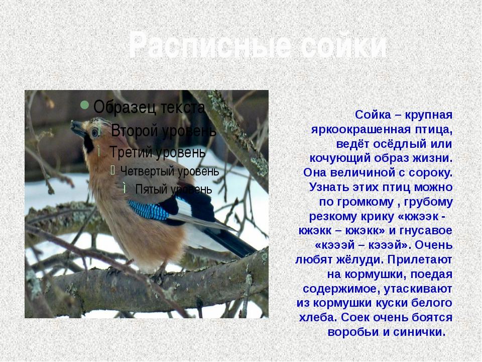 Расписные сойки Сойка – крупная яркоокрашенная птица, ведёт осёдлый или кочу...