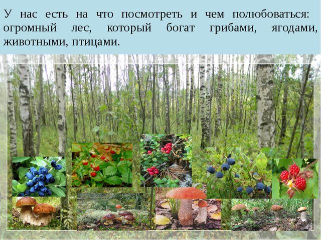 У нас есть на что посмотреть и чем полюбоваться: огромный лес, который богат...