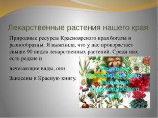 Лекарственные растения нашего края Природные ресурсы Красноярского края богат
