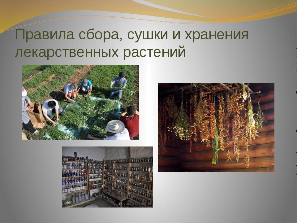 Правила сбора, сушки и хранения лекарственных растений