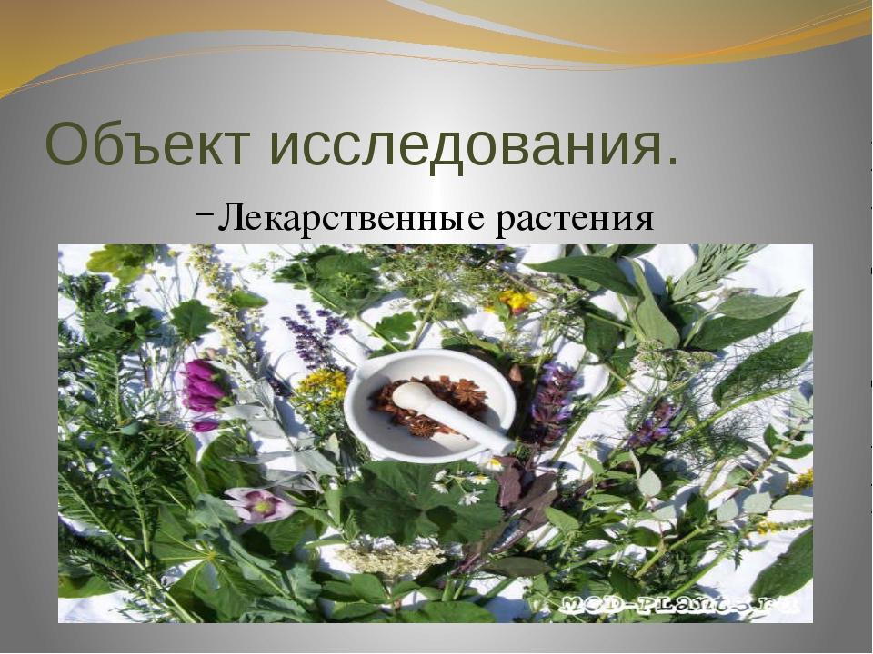 Объект исследования. Лекарственные растения