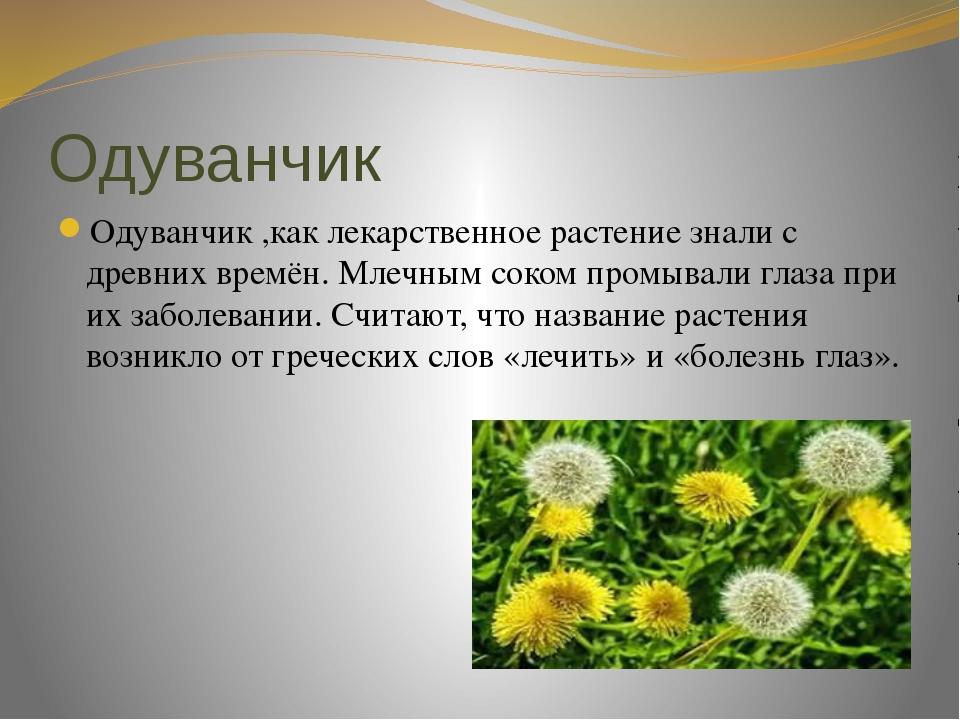 Одуванчик Одуванчик ,как лекарственное растение знали с древних времён. Млечн...