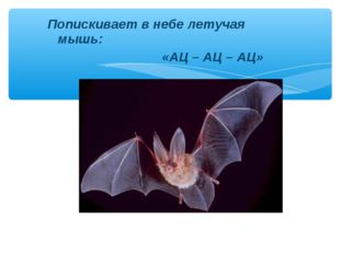 Попискивает в небе летучая мышь: «АЦ – АЦ – АЦ»