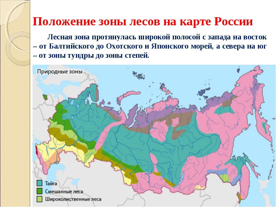 Положение зоны лесов на карте России Лесная зона протянулась широкой полосой...