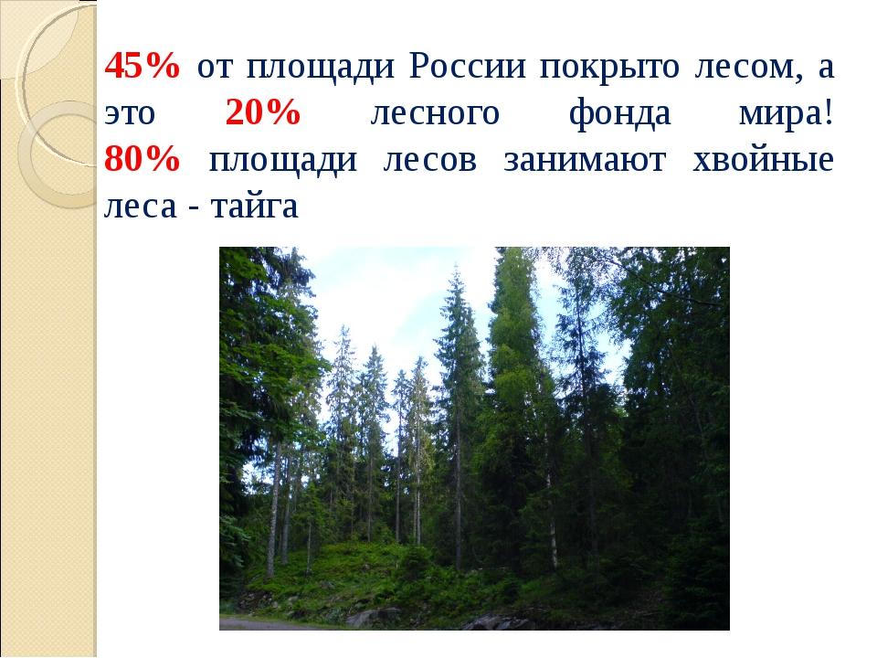 45% от площади России покрыто лесом, а это 20% лесного фонда мира! 80% площад...