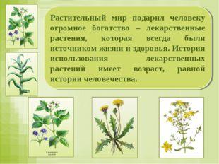 Растительный мир подарил человеку огромное богатство – лекарственные растения