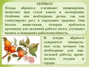 АБРИКОС Плоды абрикоса усиливают пищеварение, помогают при сухом кашле и мало