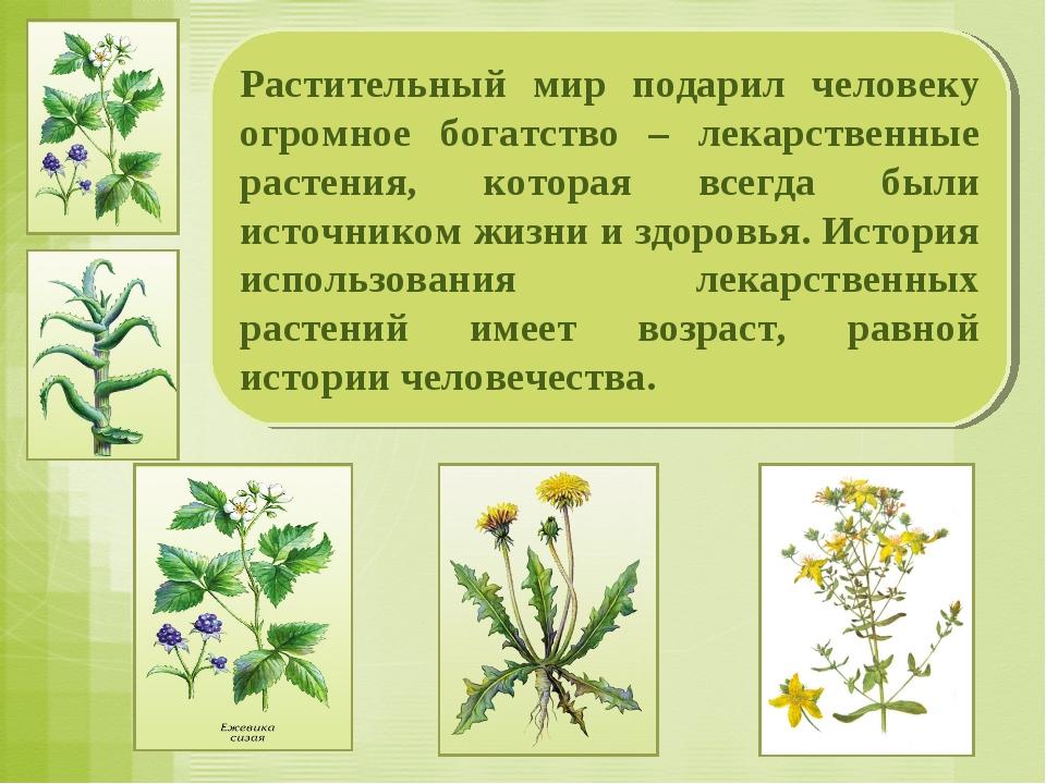 Растительный мир подарил человеку огромное богатство – лекарственные растения...