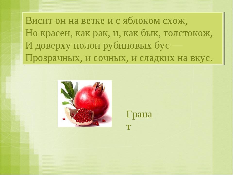 Висит он на ветке и с яблоком схож, Но красен, как рак, и, как бык, толстокож...