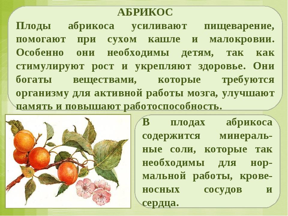 АБРИКОС Плоды абрикоса усиливают пищеварение, помогают при сухом кашле и мало...