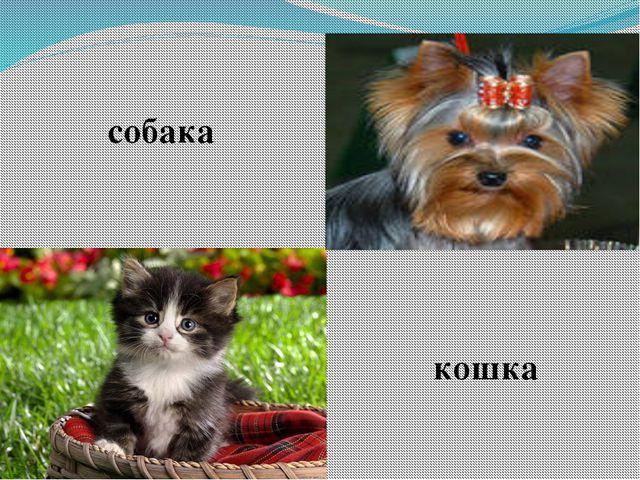 собака кошка
