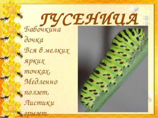 ГУСЕНИЦА Бабочкина дочка Вся в мелких ярких точках, Медленно ползет, Листики