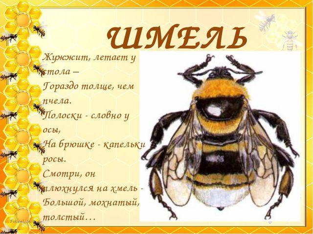 ШМЕЛЬ Жужжит, летает у стола – Гораздо толще, чем пчела. Полоски - словно у о...