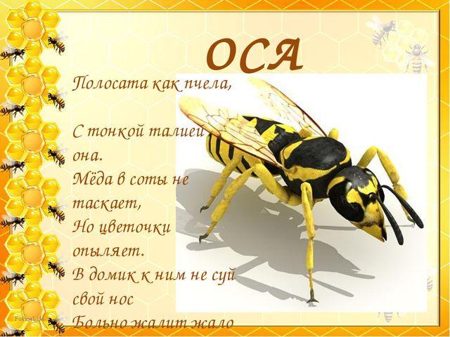 ОСА Полосата как пчела, С тонкой талией она. Мёда в соты не таскает, Но цвето...
