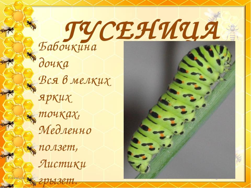 ГУСЕНИЦА Бабочкина дочка Вся в мелких ярких точках, Медленно ползет, Листики...