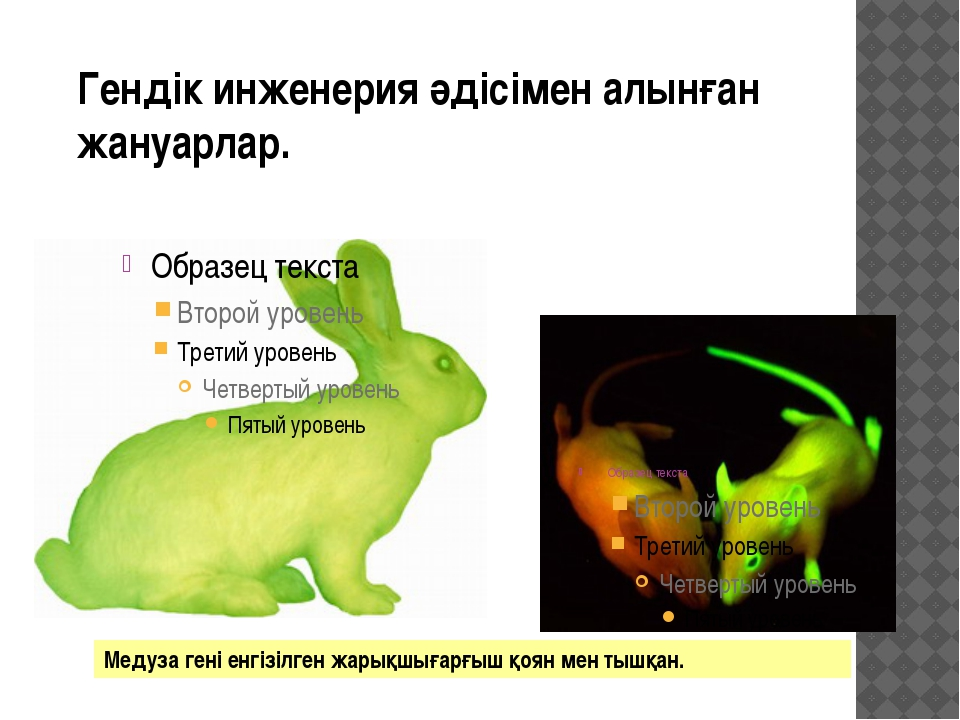Гендік инженерия әдісімен алынған жануарлар. Медуза гені енгізілген жарықшыға...