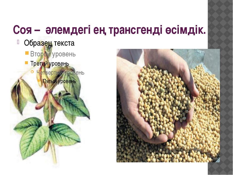 Соя – әлемдегі ең трансгенді өсімдік.