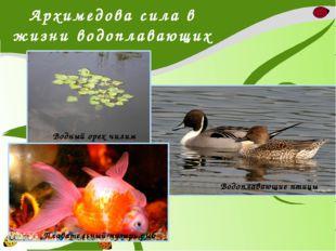 Архимедова сила в жизни водоплавающих Водный орех чилим Плавательный пузырь р