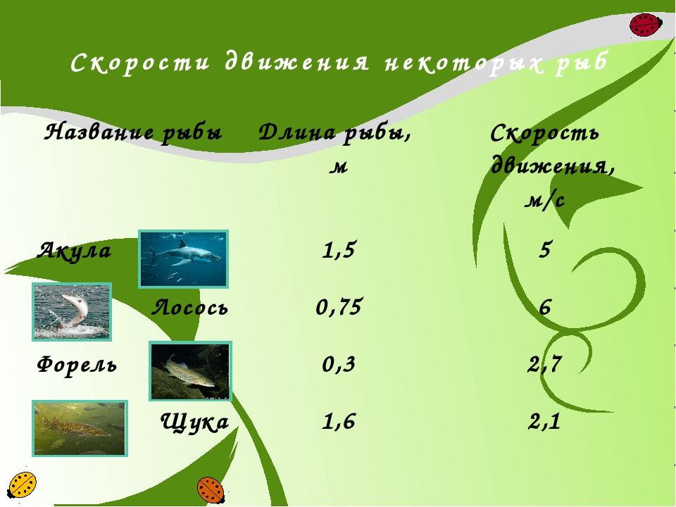 Скорости движения некоторых рыб Название рыбы Длина рыбы, м Скорость движения...