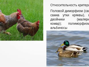 Относительность критерия Половой диморфизм (самец и самка утки кряквы), виды-