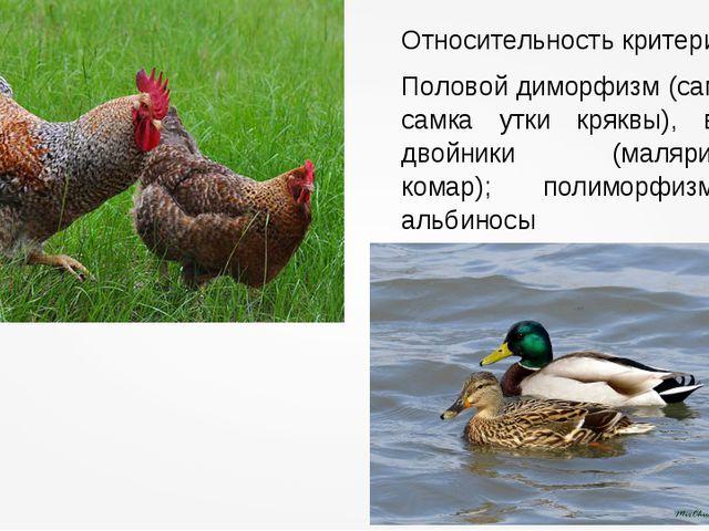 Относительность критерия Половой диморфизм (самец и самка утки кряквы), виды-...