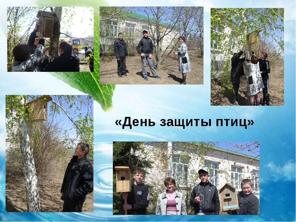 «День защиты птиц»