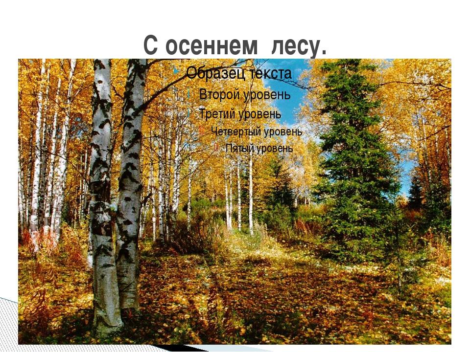 С осеннем лесу.