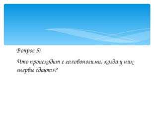 Вопрос 5: Что происходит с головоногими, когда у них «нервы сдают»?