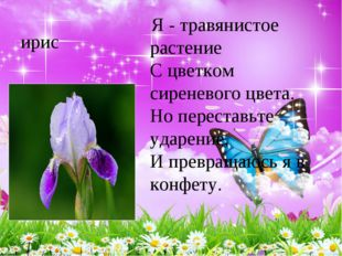 ирис Я - травянистое растение С цветком сиреневого цвета. Но переставьте у