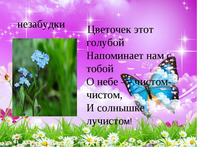 незабудки Цветочек этот голубой Напоминает нам с тобой О небе — чистом-чис...