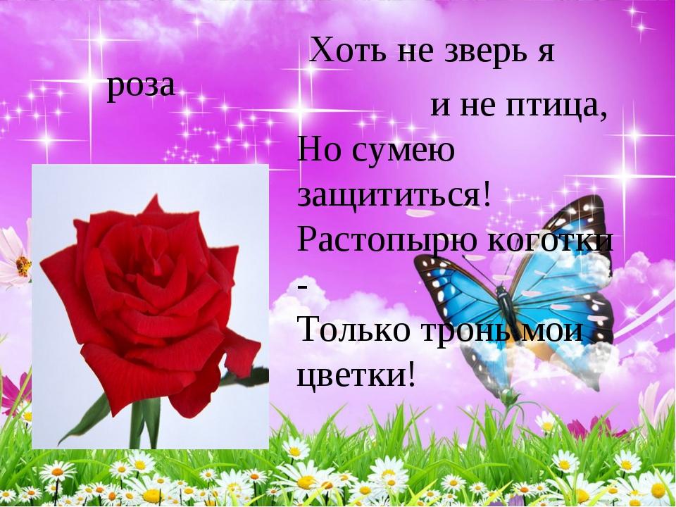 роза Хоть не зверь я и не птица, Но сумею защититься! Растопырю коготки -...