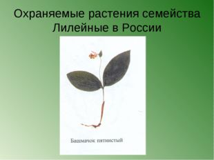 Охраняемые растения семейства Лилейные в России