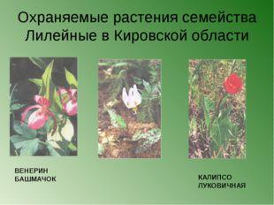 Охраняемые растения семейства Лилейные в Кировской области ВЕНЕРИН БАШМАЧОК К