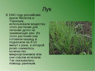 Лук В 1941 году российские врачи Филатов и Торопцев, использовали вещества эт