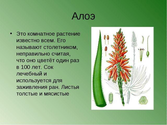 Алоэ Это комнатное растение известно всем. Его называют столетником, неправил...