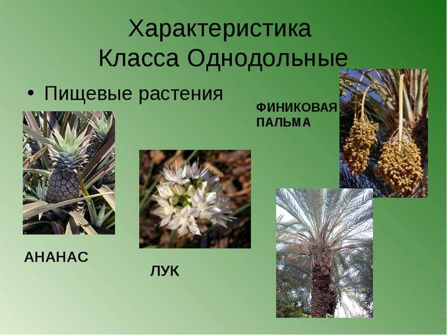 Характеристика Класса Однодольные Пищевые растения ФИНИКОВАЯ ПАЛЬМА АНАНАС ЛУК