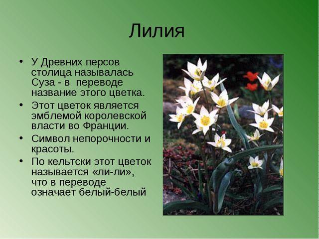 Лилия У Древних персов столица называлась Суза - в переводе название этого цв...
